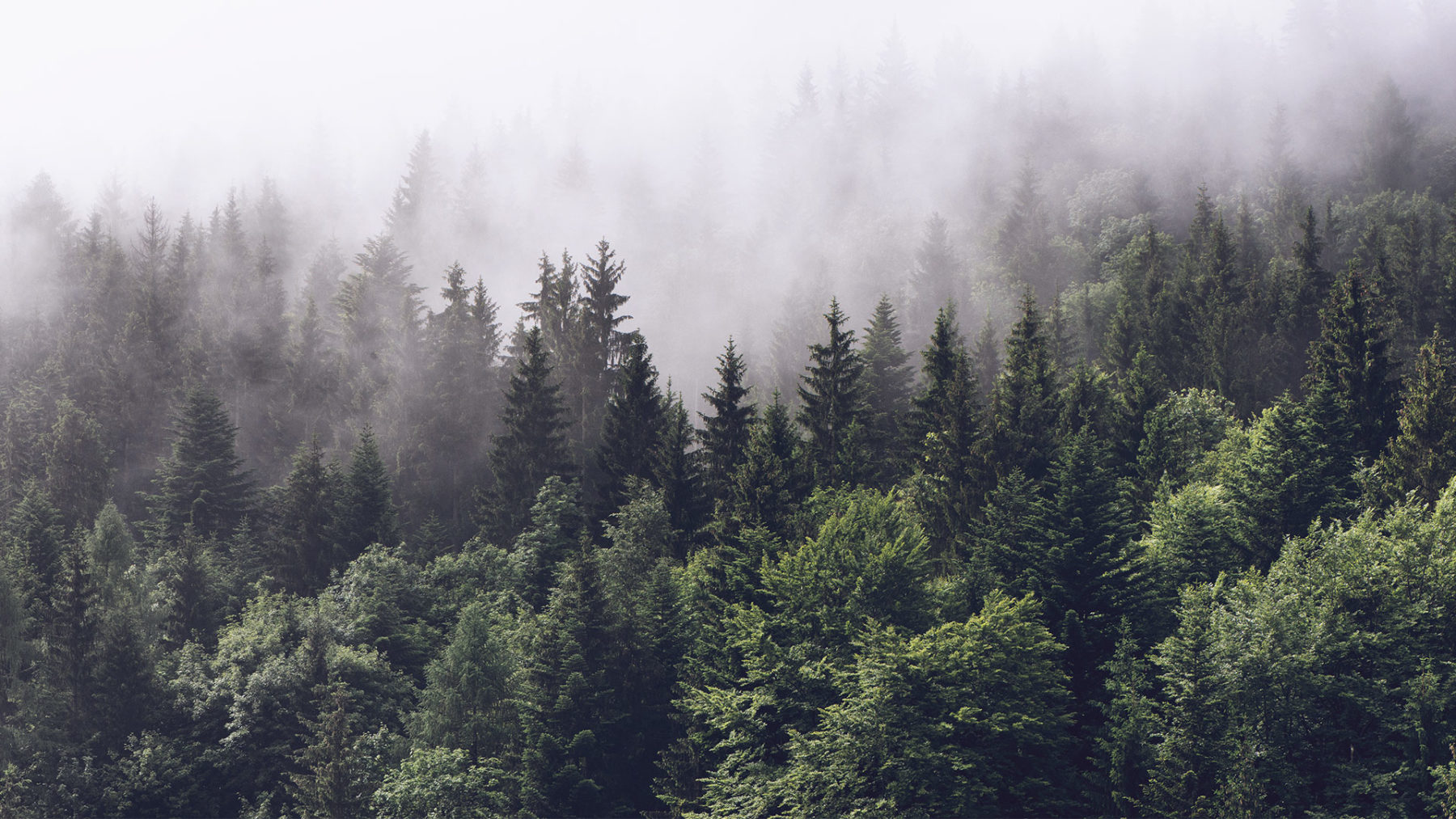 Forest Background The Linux Foundation